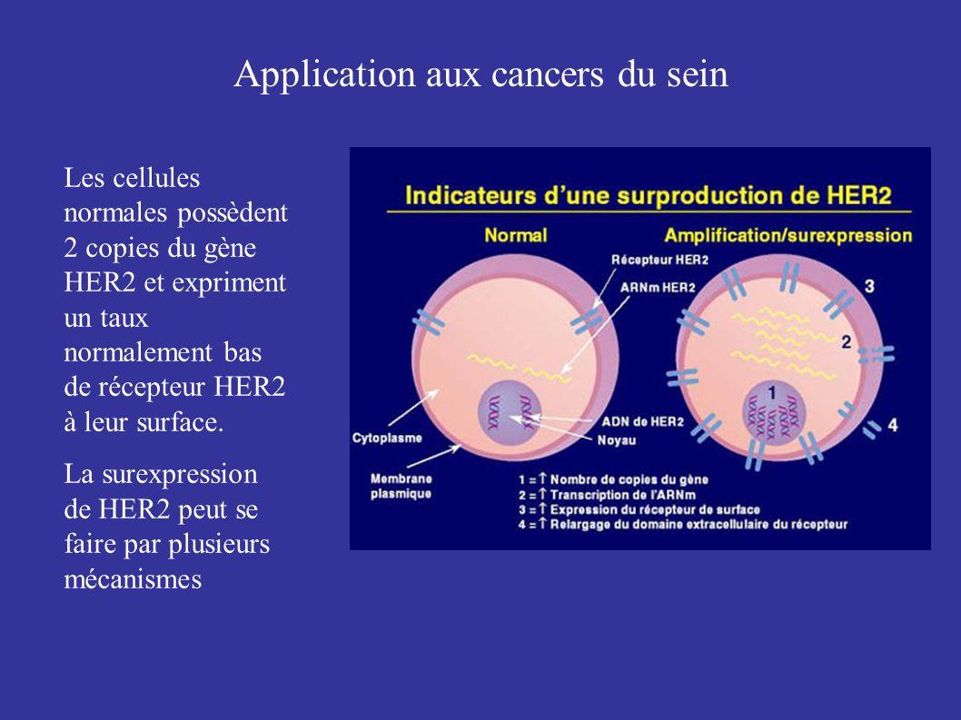 Les cellules normales possèdent 2 copies du gène HER2 et expriment un taux normalement bas de récepteur HER2 à leur surface. La surexpression de HER2