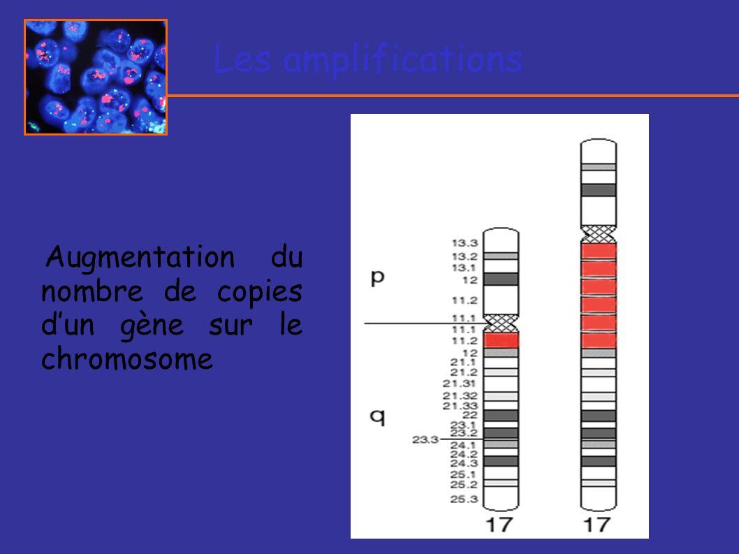 Les amplifications Augmentation du nombre de copies dun gène sur le chromosome