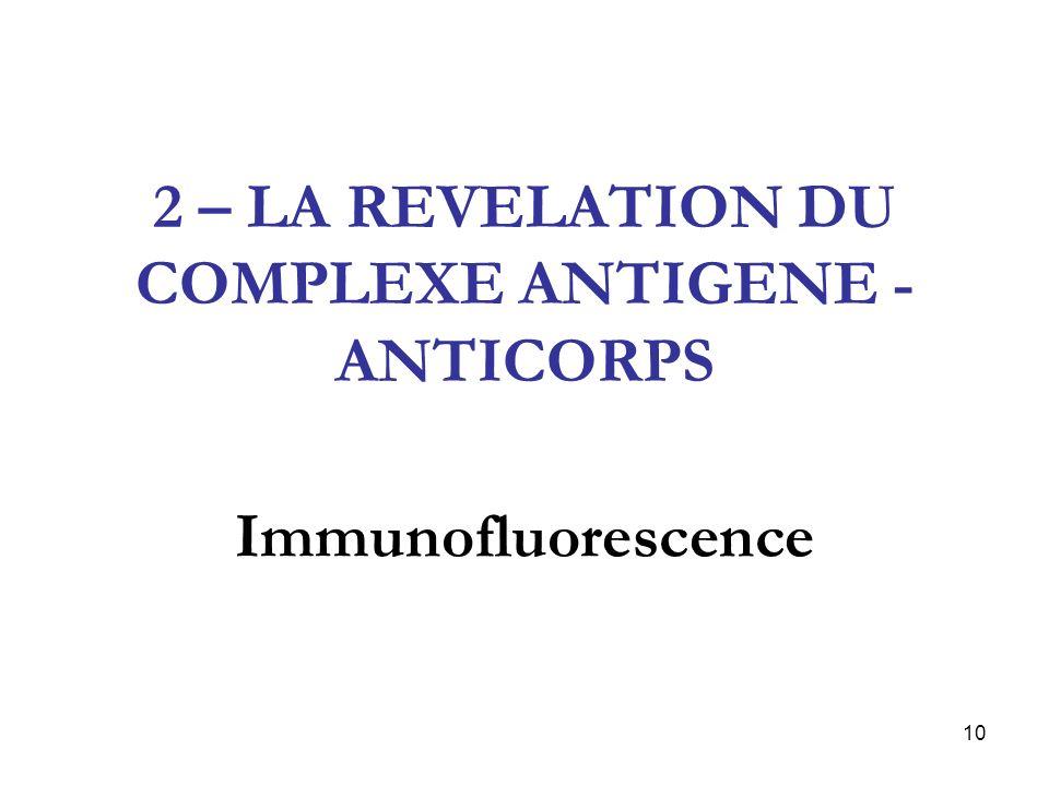 10 2 – LA REVELATION DU COMPLEXE ANTIGENE - ANTICORPS Immunofluorescence