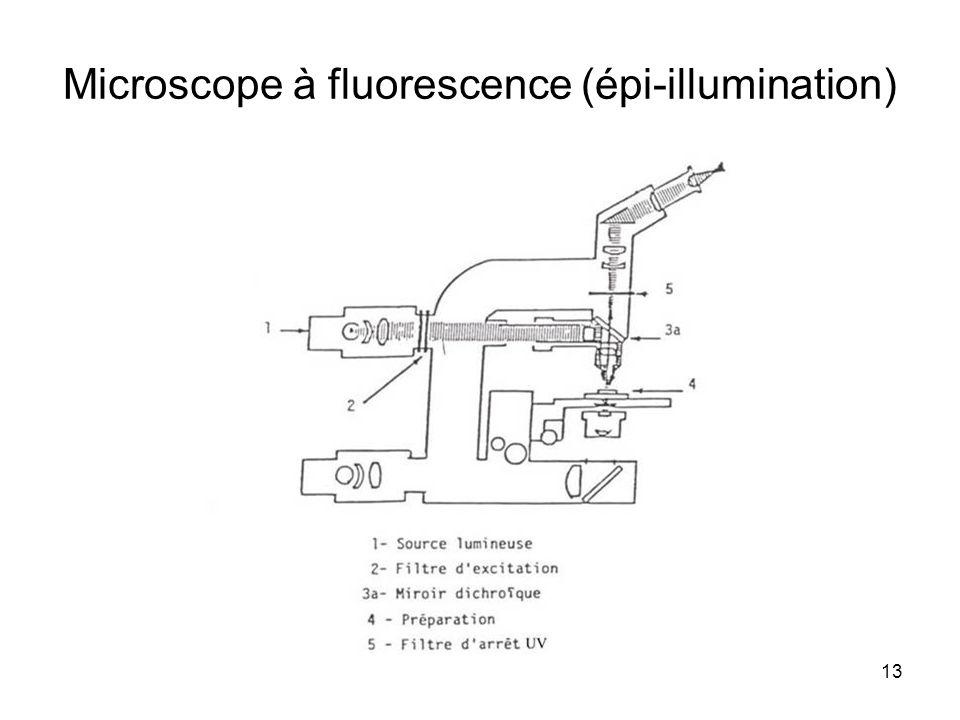 13 Microscope à fluorescence (épi-illumination)