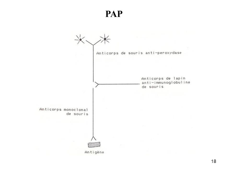 18 PAP