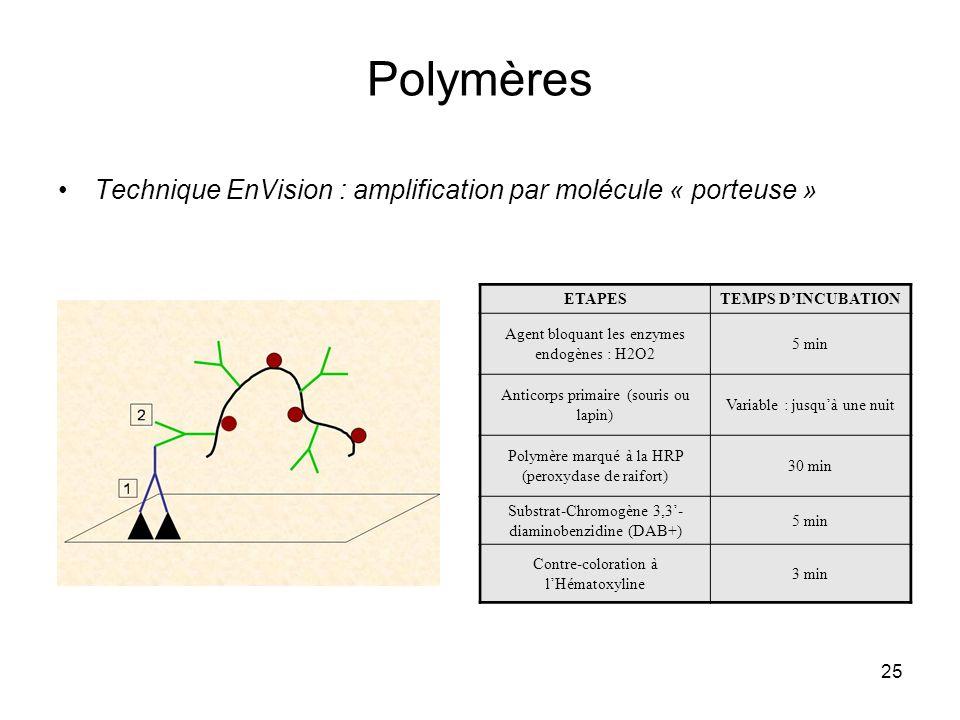 25 Polymères Technique EnVision : amplification par molécule « porteuse » ETAPESTEMPS DINCUBATION Agent bloquant les enzymes endogènes : H2O2 5 min An