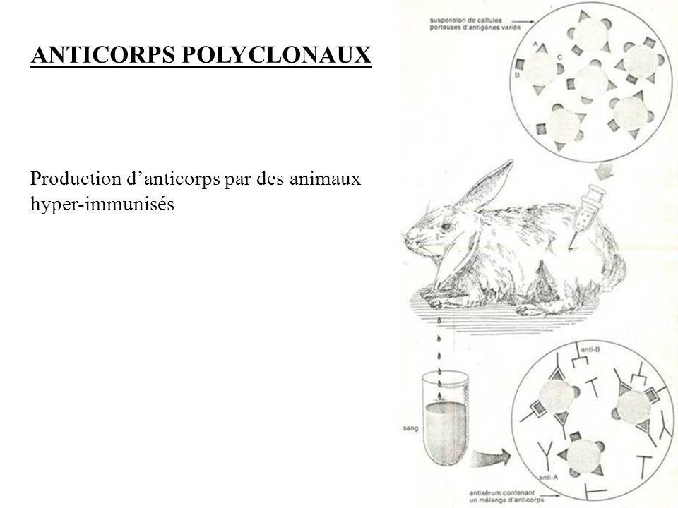 26 Résumé polymère (Kit EnVision) Étape 1 : Blocage des péroxydases endogènes Étape 2 : Anticorps primaire Étape 3 : Polymère marqué à la HRP Étape 4 : Substrat chromogène Étape 5 : Contre coloration à lhématoxyline Incubation