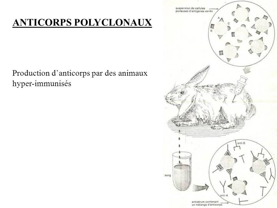 16 Immuno-histo-chimie et Immuno-cyto-chimie
