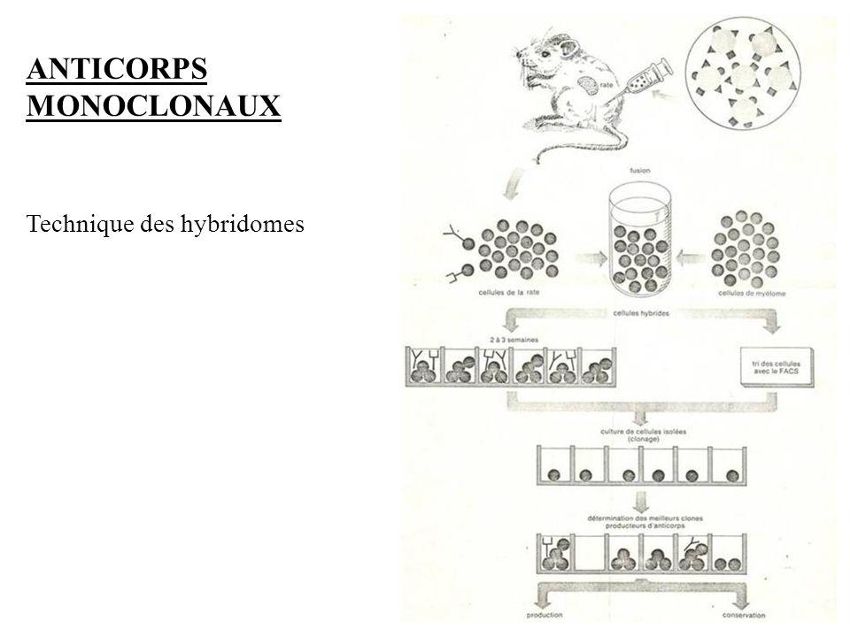 6 Technique des hybridomes ANTICORPS MONOCLONAUX