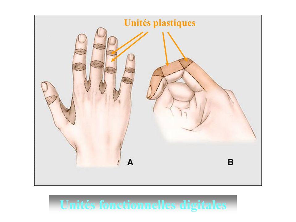 QUESTION n°4: Un patient se présente aux urgences avec une plaie en regard du pli palmaire distal de la main droite par bris de verre.
