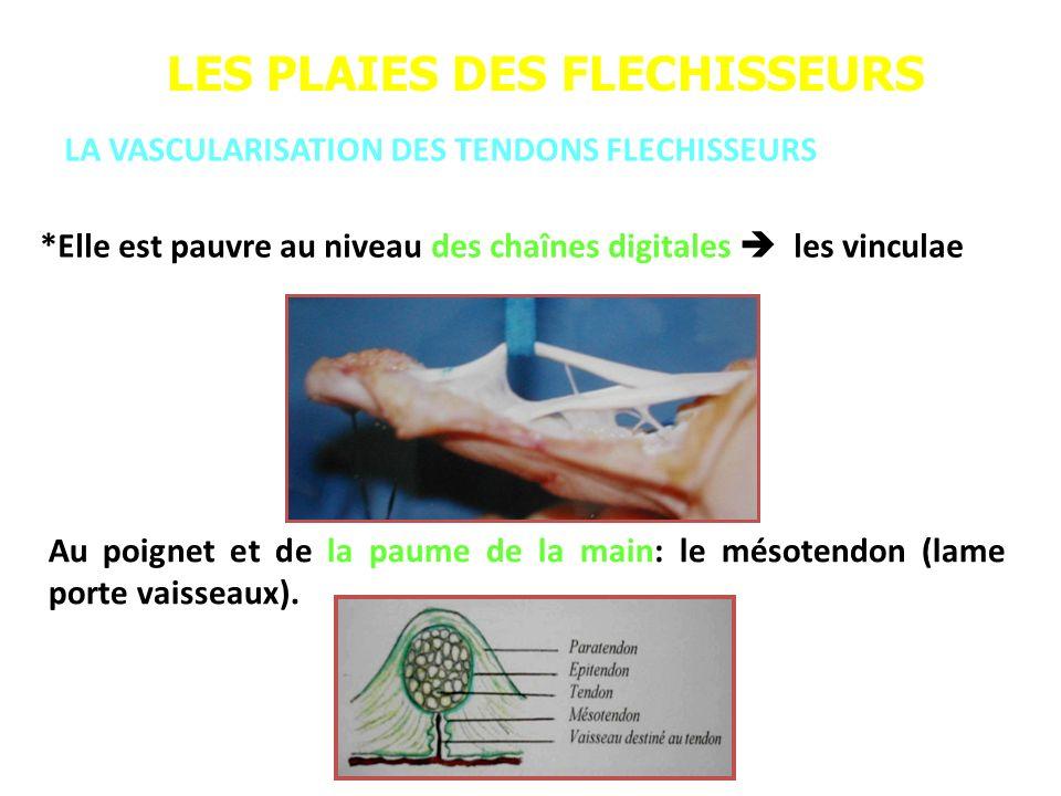 LES PLAIES DES FLECHISSEURS LA VASCULARISATION DES TENDONS FLECHISSEURS *Elle est pauvre au niveau des chaînes digitales les vinculae Au poignet et de