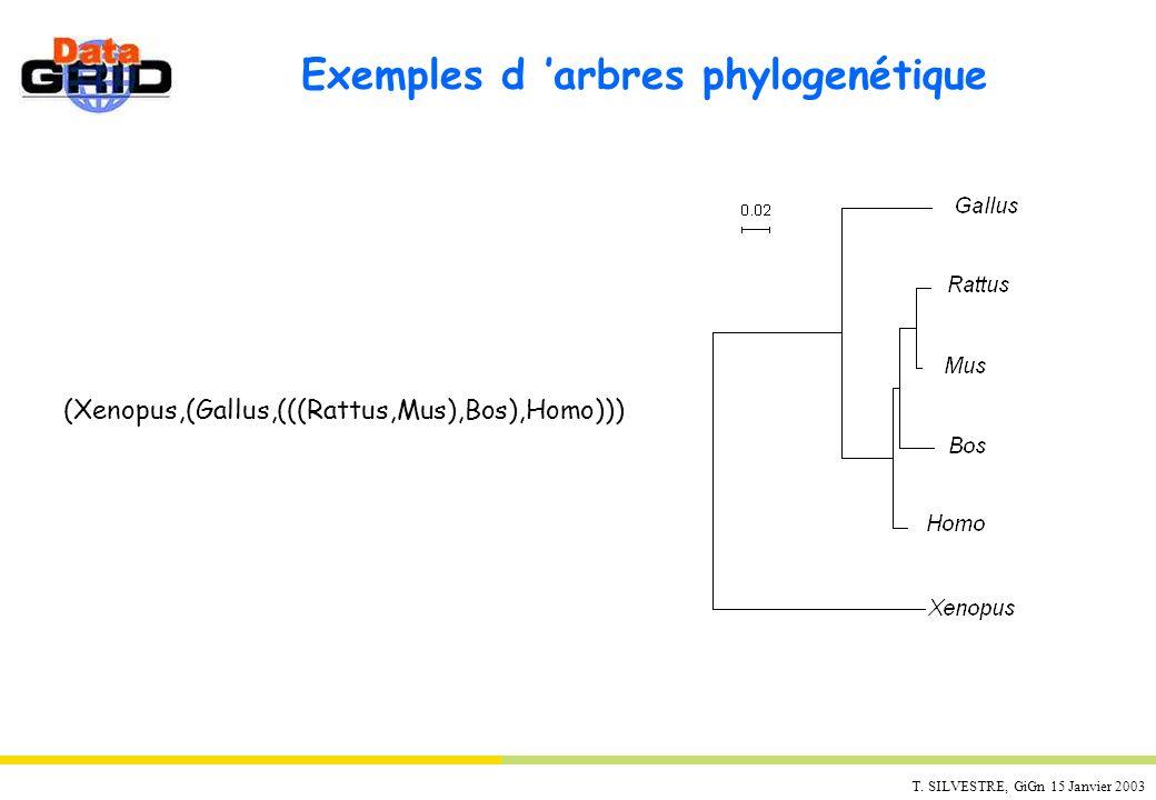 T. SILVESTRE, GiGn 15 Janvier 2003 Exemples d arbres phylogenétique (Xenopus,(Gallus,(((Rattus,Mus),Bos),Homo)))