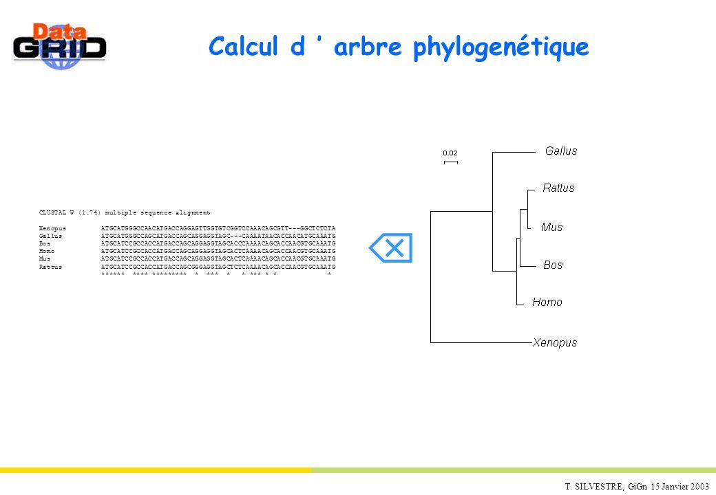 T. SILVESTRE, GiGn 15 Janvier 2003 Calcul d arbre phylogenétique CLUSTAL W (1.74) multiple sequence alignment Xenopus ATGCATGGGCCAACATGACCAGGAGTTGGTGT