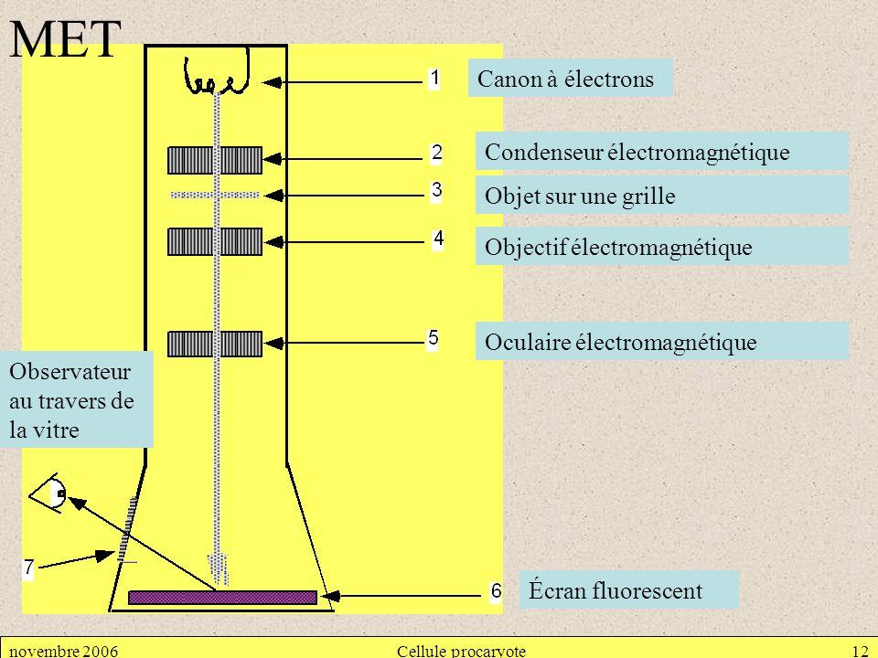 novembre 2006Cellule procaryote12 Canon à électrons Condenseur électromagnétique Objet sur une grille Objectif électromagnétique Oculaire électromagné