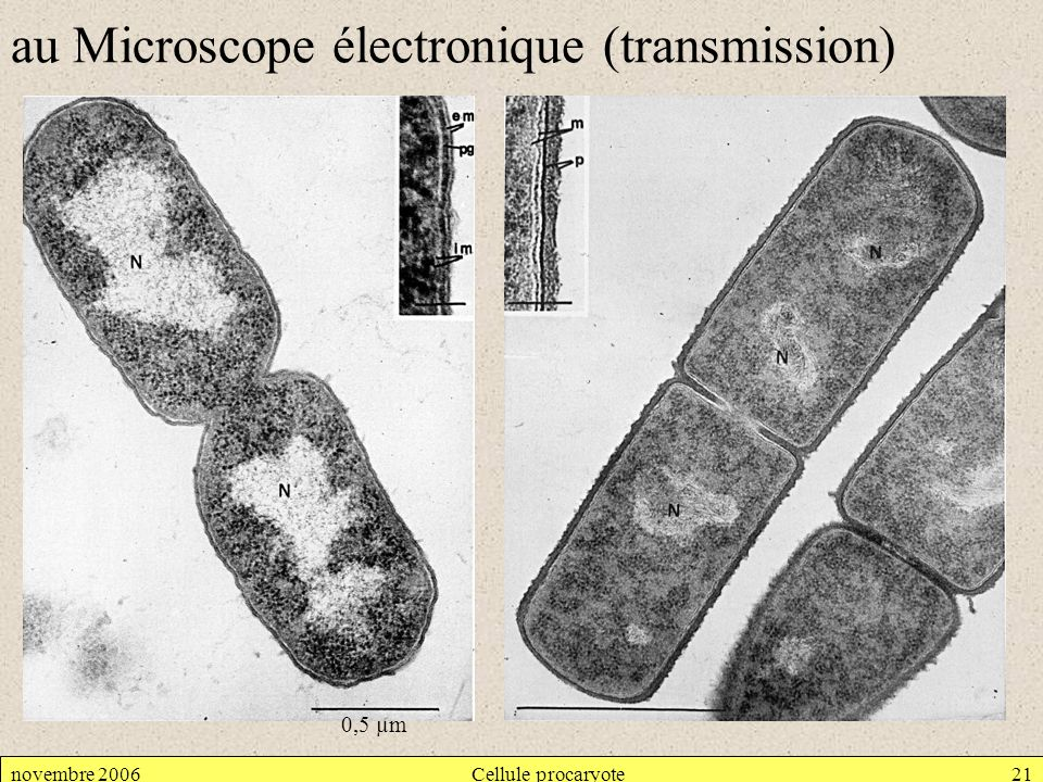 novembre 2006Cellule procaryote21 au Microscope électronique (transmission) 0,5 µm