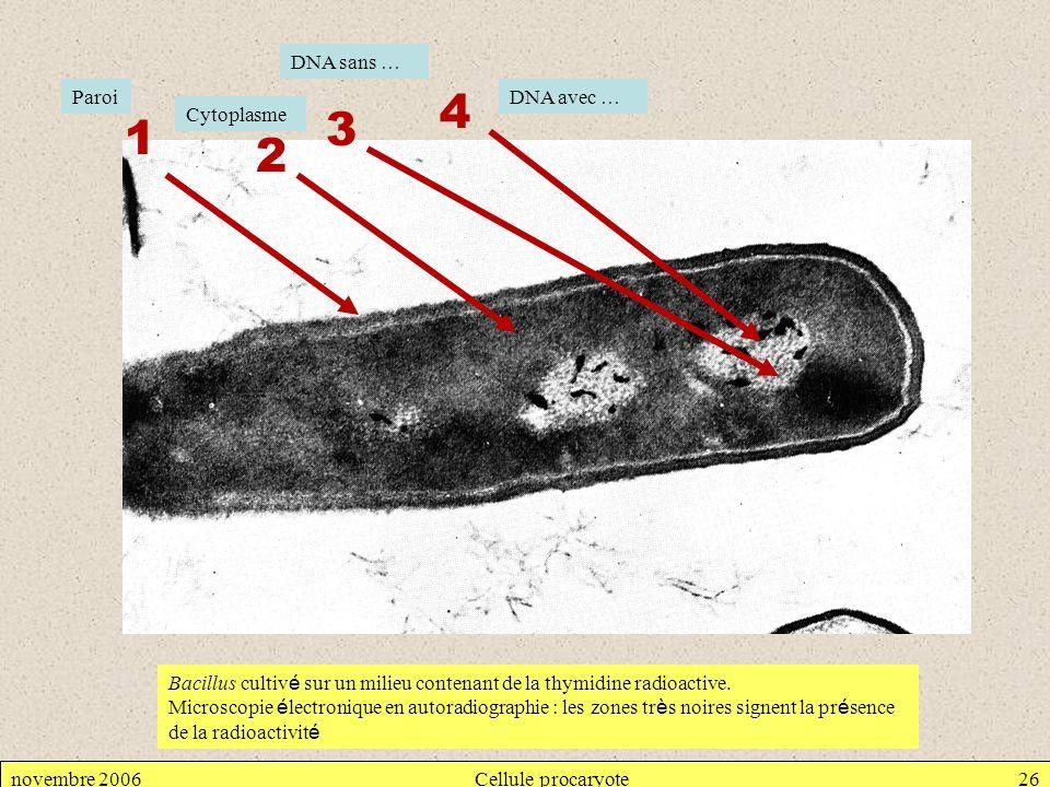 novembre 2006Cellule procaryote26 1 2 3 4 Bacillus cultiv é sur un milieu contenant de la thymidine radioactive. Microscopie é lectronique en autoradi
