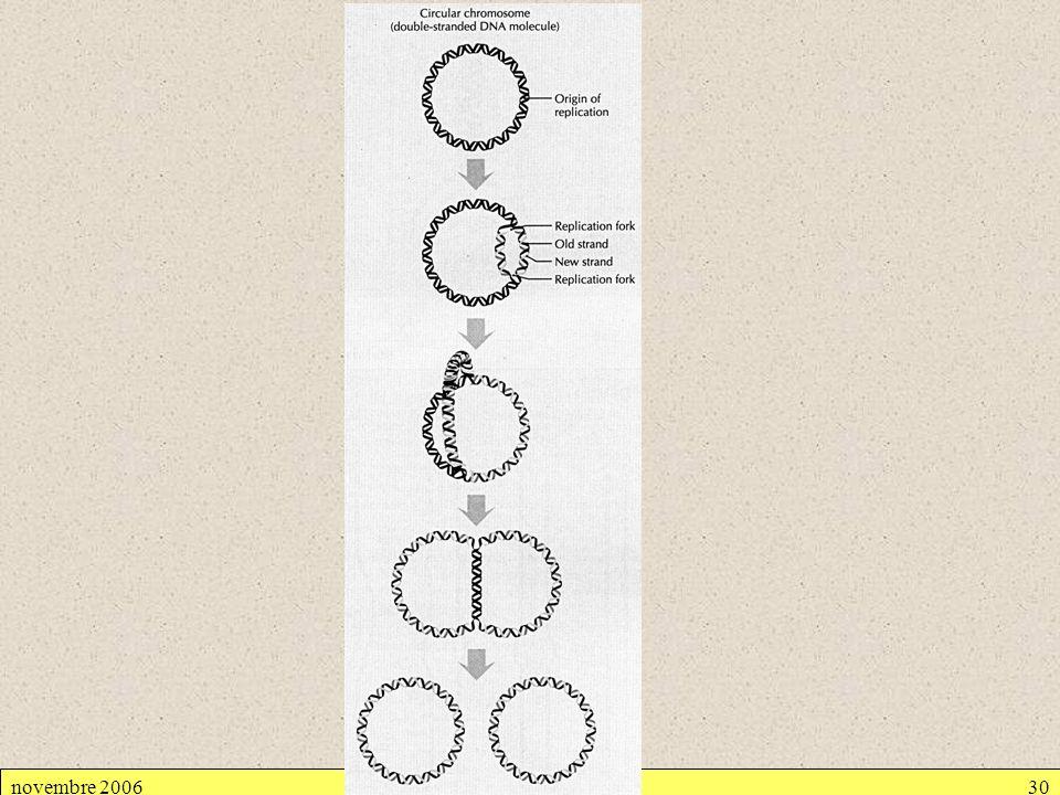 novembre 2006Cellule procaryote30