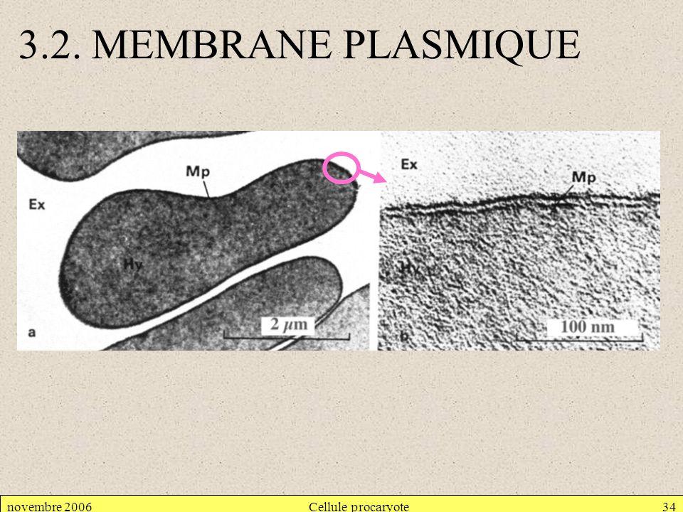 novembre 2006Cellule procaryote34 3.2. MEMBRANE PLASMIQUE