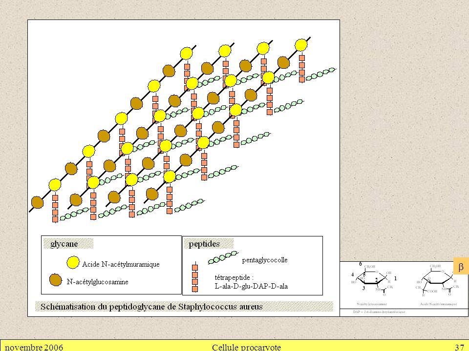novembre 2006Cellule procaryote37 1 3 45 6 2