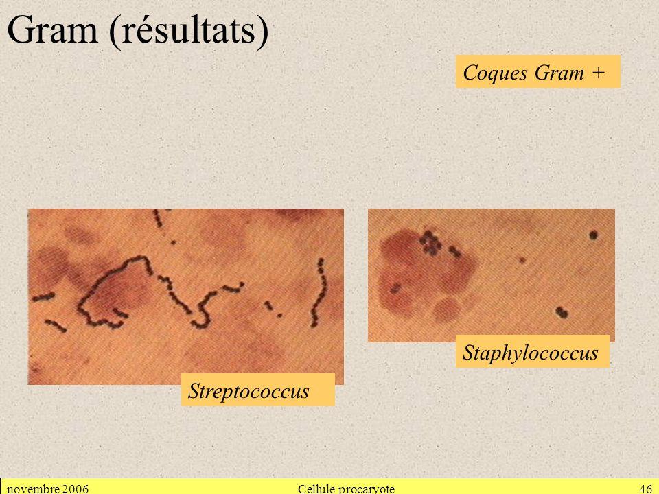 novembre 2006Cellule procaryote46 Gram (résultats) Coques Gram + Staphylococcus Streptococcus
