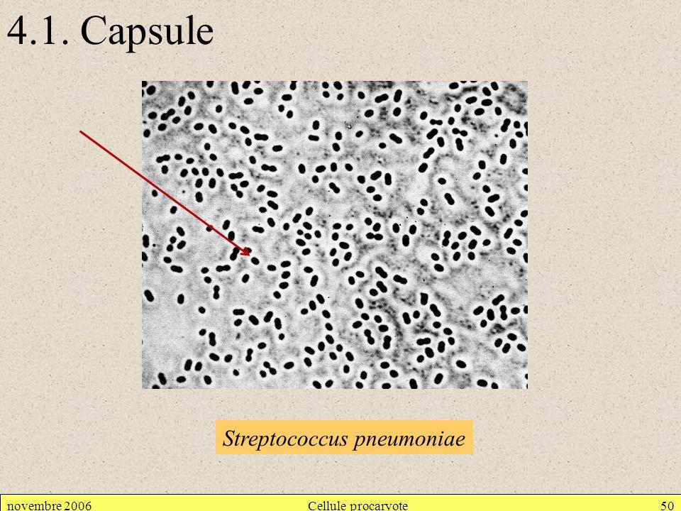 novembre 2006Cellule procaryote50 4.1. Capsule Streptococcus pneumoniae