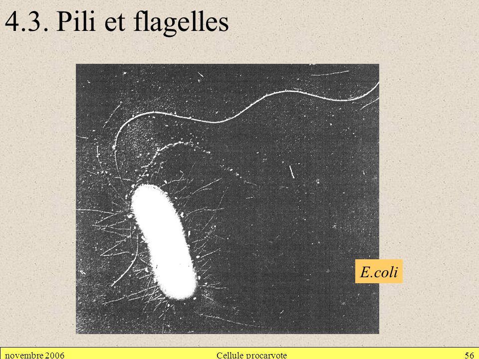 novembre 2006Cellule procaryote56 4.3. Pili et flagelles E.coli