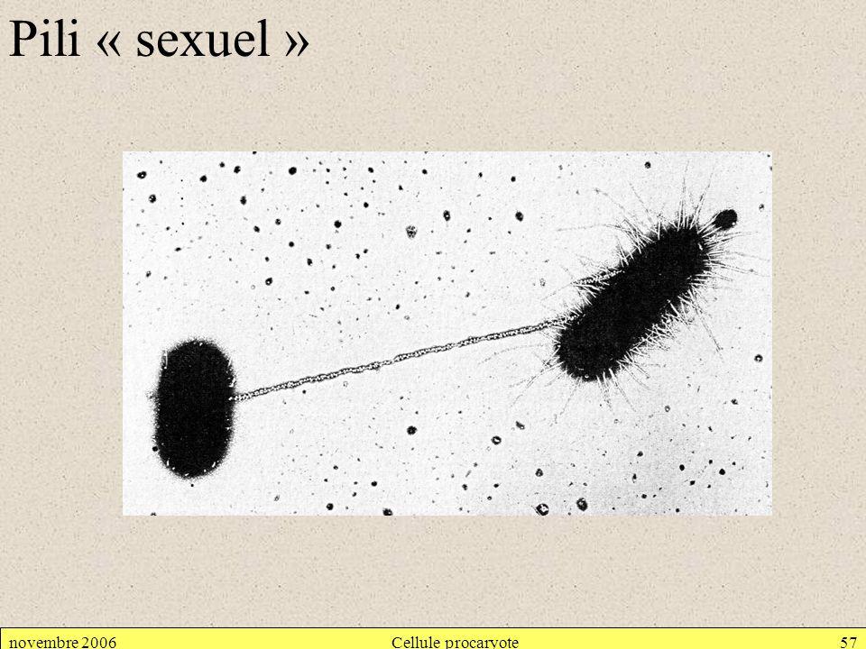 novembre 2006Cellule procaryote57 Pili « sexuel »