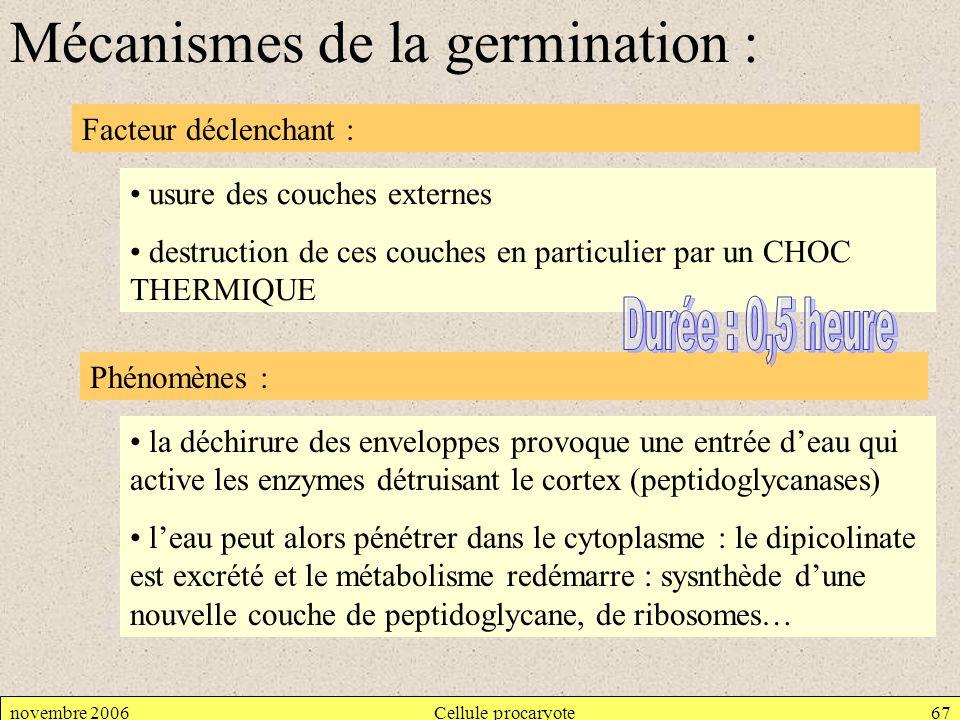 novembre 2006Cellule procaryote67 Mécanismes de la germination : Facteur déclenchant : Phénomènes : la déchirure des enveloppes provoque une entrée de