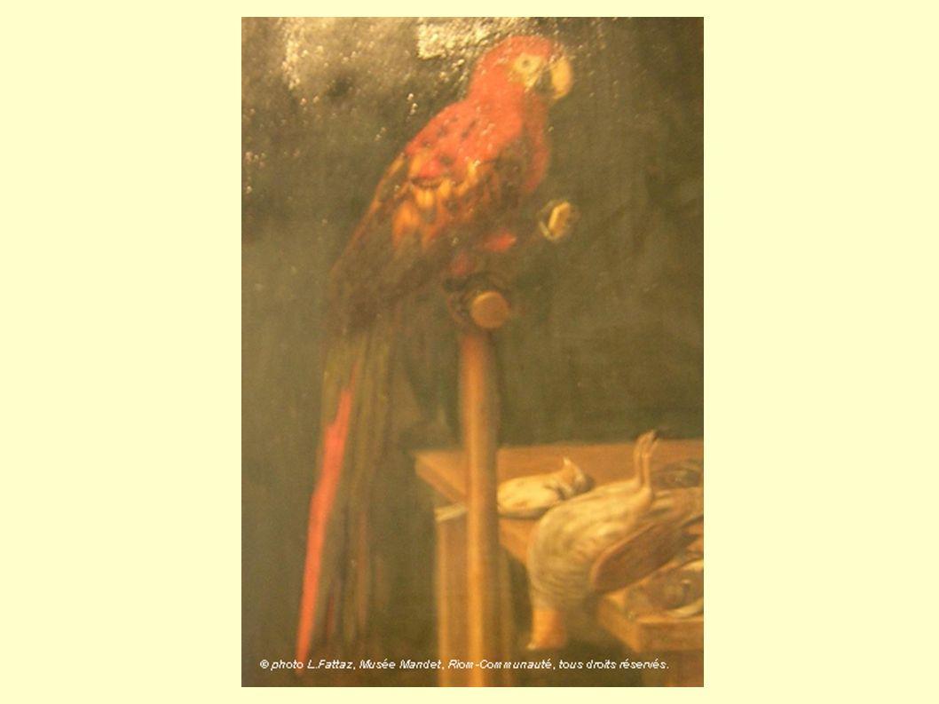 Le perroquet caressait de son bec ses belles plumes de toutes les couleurs.