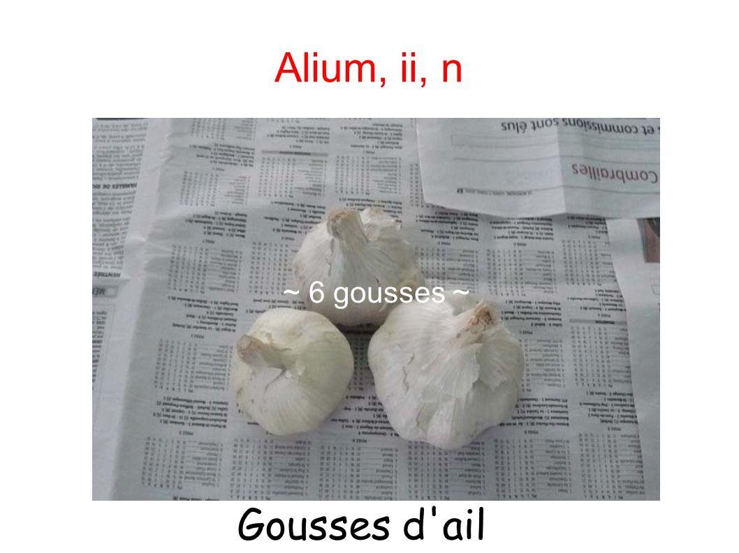 Alium, ii, n ~ 6 gousses d'ail ~ ~ 6 gousses ~ Gousses d'ail