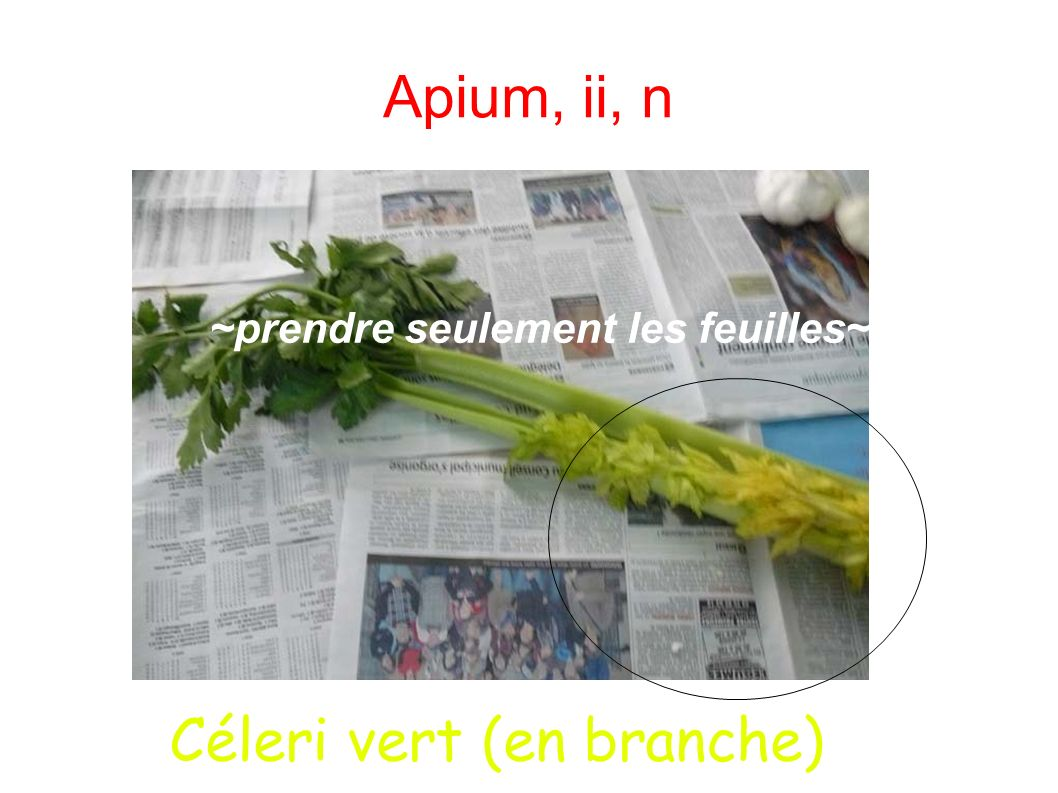 Apium, ii, n ~prendre seulement les feuilles~ Céleri vert (en branche)