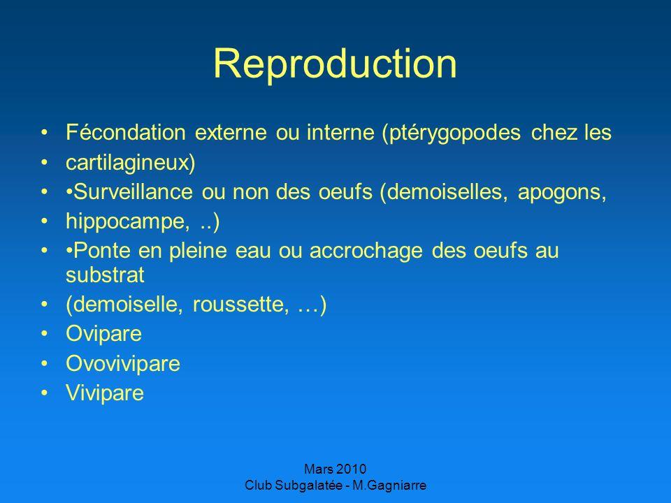 Mars 2010 Club Subgalatée - M.Gagniarre Reproduction Fécondation externe ou interne (ptérygopodes chez les cartilagineux) Surveillance ou non des oeuf