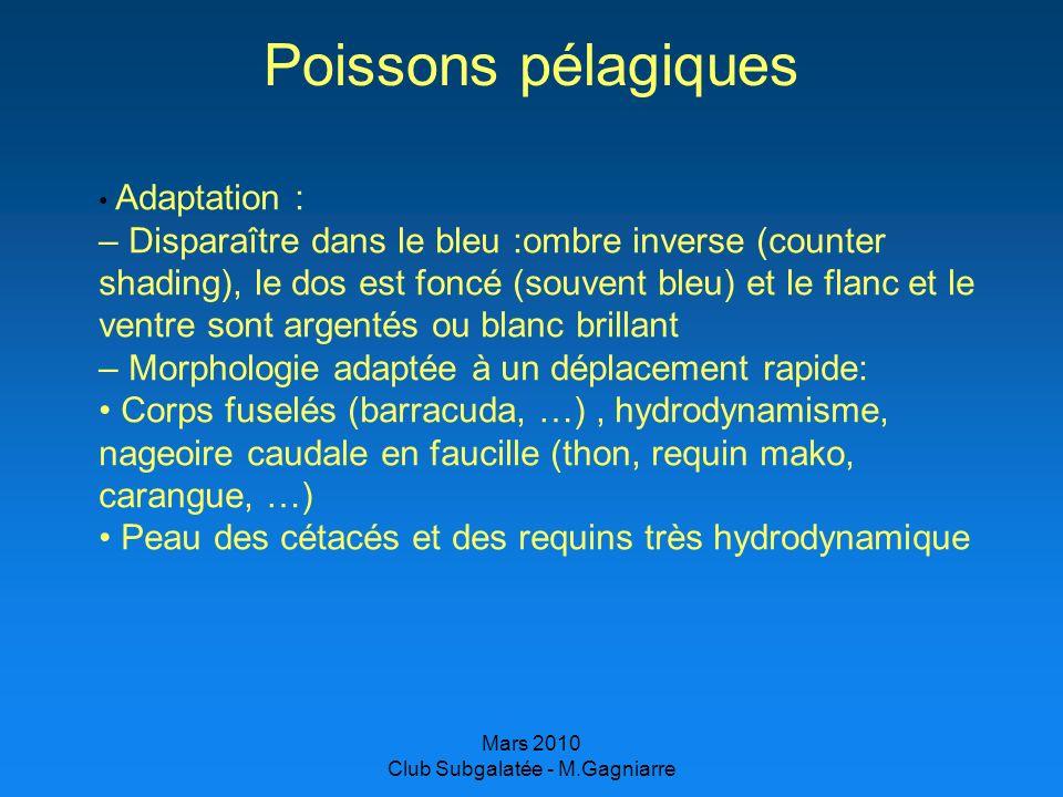 Mars 2010 Club Subgalatée - M.Gagniarre Poissons pélagiques Adaptation : – Disparaître dans le bleu :ombre inverse (counter shading), le dos est foncé