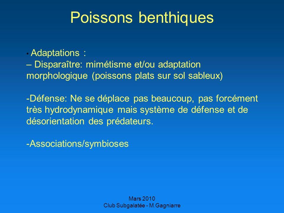 Mars 2010 Club Subgalatée - M.Gagniarre Poissons benthiques Adaptations : – Disparaître: mimétisme et/ou adaptation morphologique (poissons plats sur