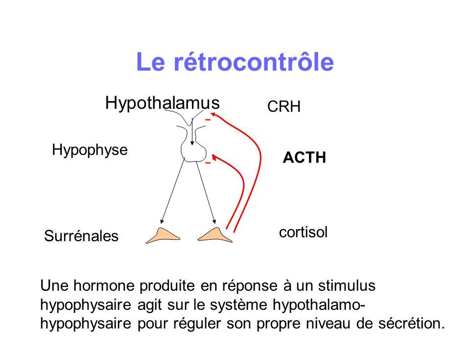 Le rétrocontrôle Hypophyse Surrénales Hypothalamus - - Une hormone produite en réponse à un stimulus hypophysaire agit sur le système hypothalamo- hyp
