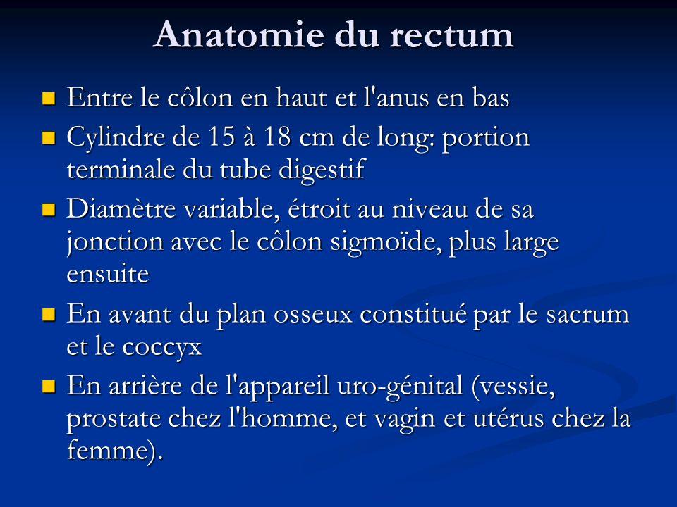 Anatomie du rectum Entre le côlon en haut et l'anus en bas Entre le côlon en haut et l'anus en bas Cylindre de 15 à 18 cm de long: portion terminale d