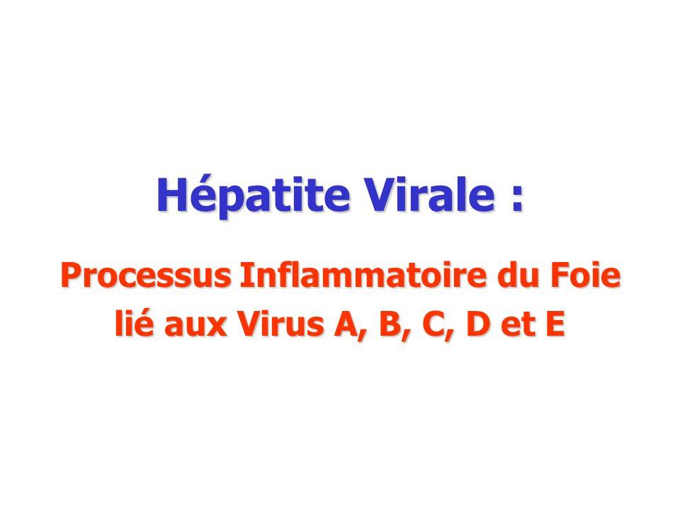 Hépatite Virale : Processus Inflammatoire du Foie lié aux Virus A, B, C, D et E
