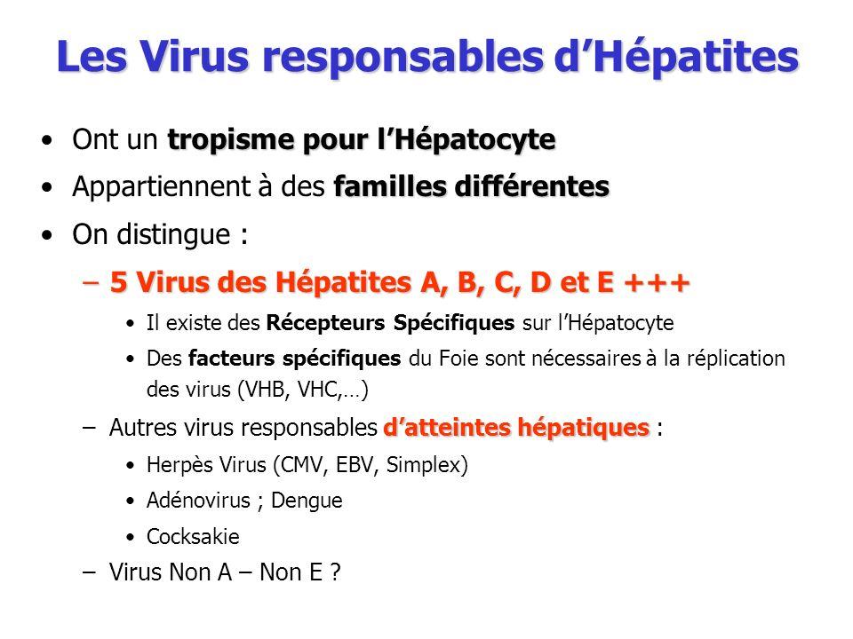 Les Virus responsables dHépatites tropisme pour lHépatocyteOnt un tropisme pour lHépatocyte familles différentesAppartiennent à des familles différent