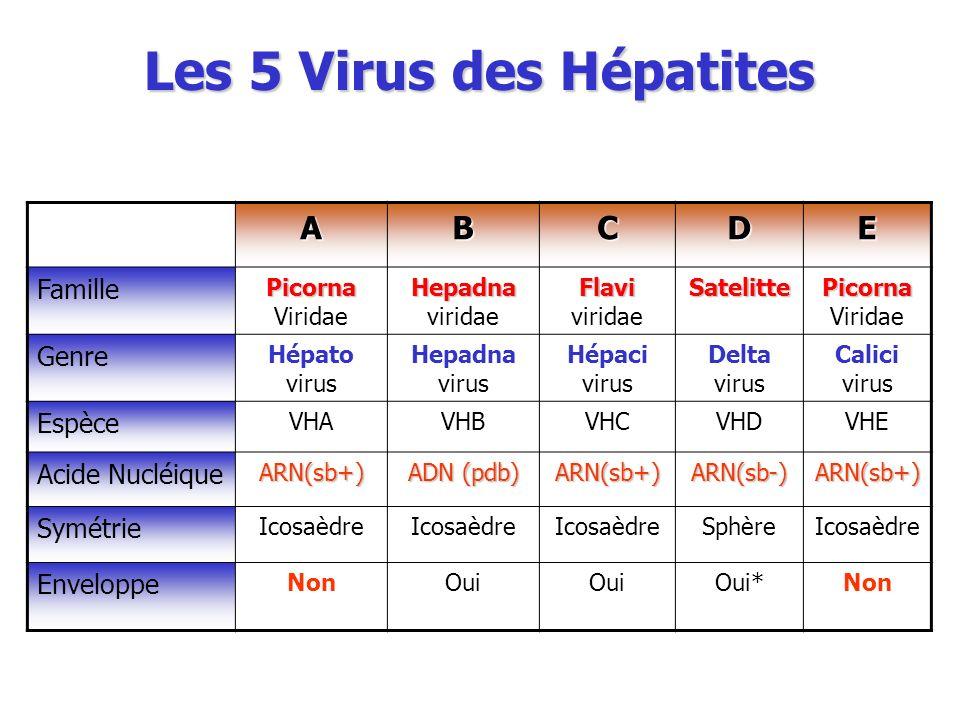 Les 5 Virus des Hépatites ABCDE Famille Picorna Picorna Viridae Hepadna Hepadna viridae Flavi Flavi viridaeSatelitte Picorna Picorna Viridae Genre Hép