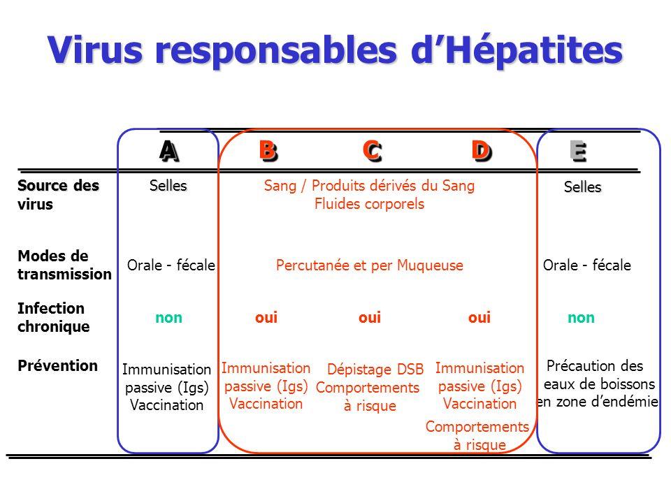 AABBCCDDEE Source des virus SellesSang / Produits dérivés du Sang Fluides corporels Modes de transmission Orale - fécalePercutanée et per Muqueuse Inf