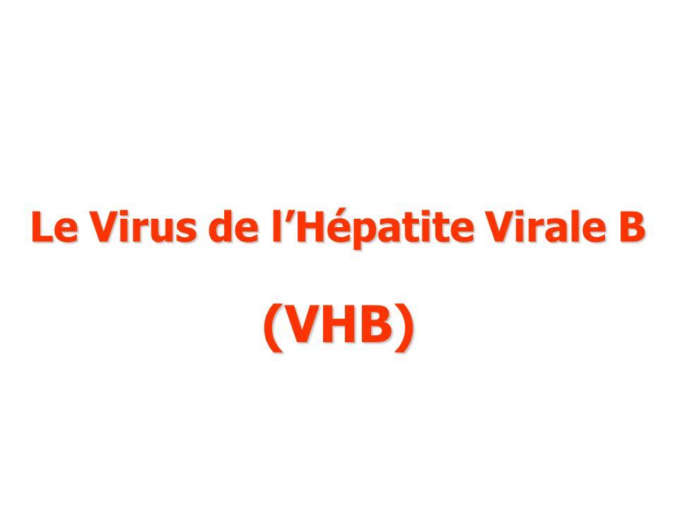 Le Virus de lHépatite Virale B (VHB)