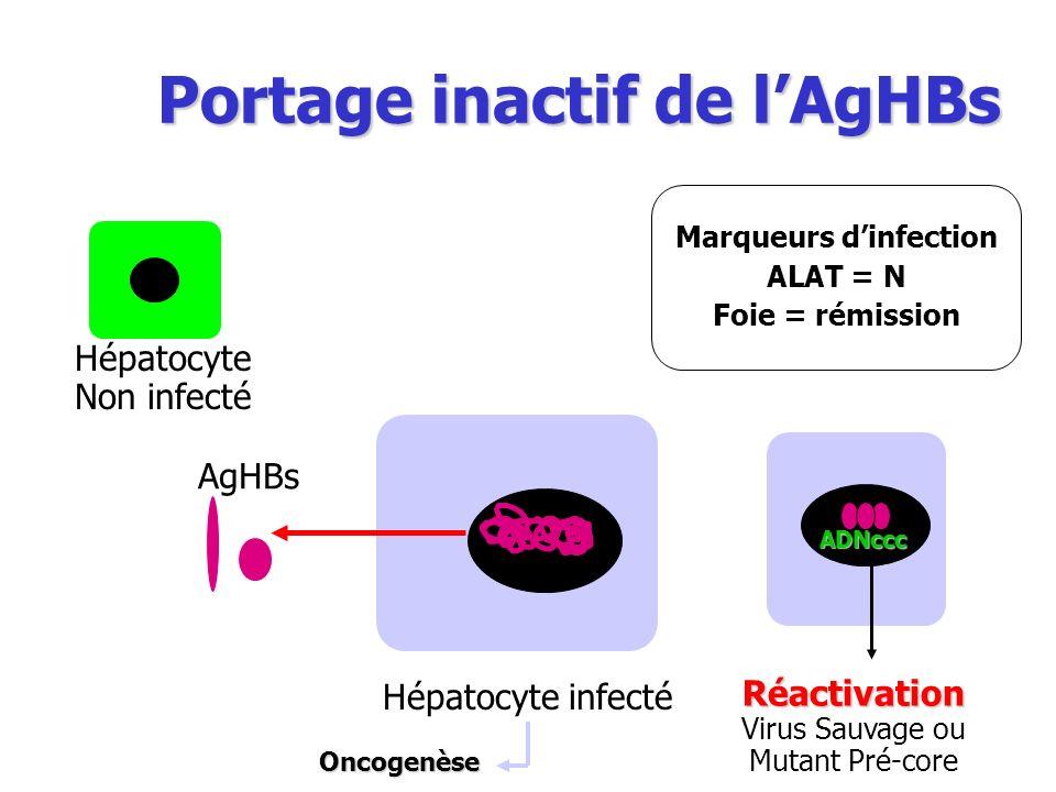Portage inactif de lAgHBs Hépatocyte Non infecté ADNccc Marqueurs dinfection ALAT = N Foie = rémission Réactivation Virus Sauvage ou Mutant Pré-core O