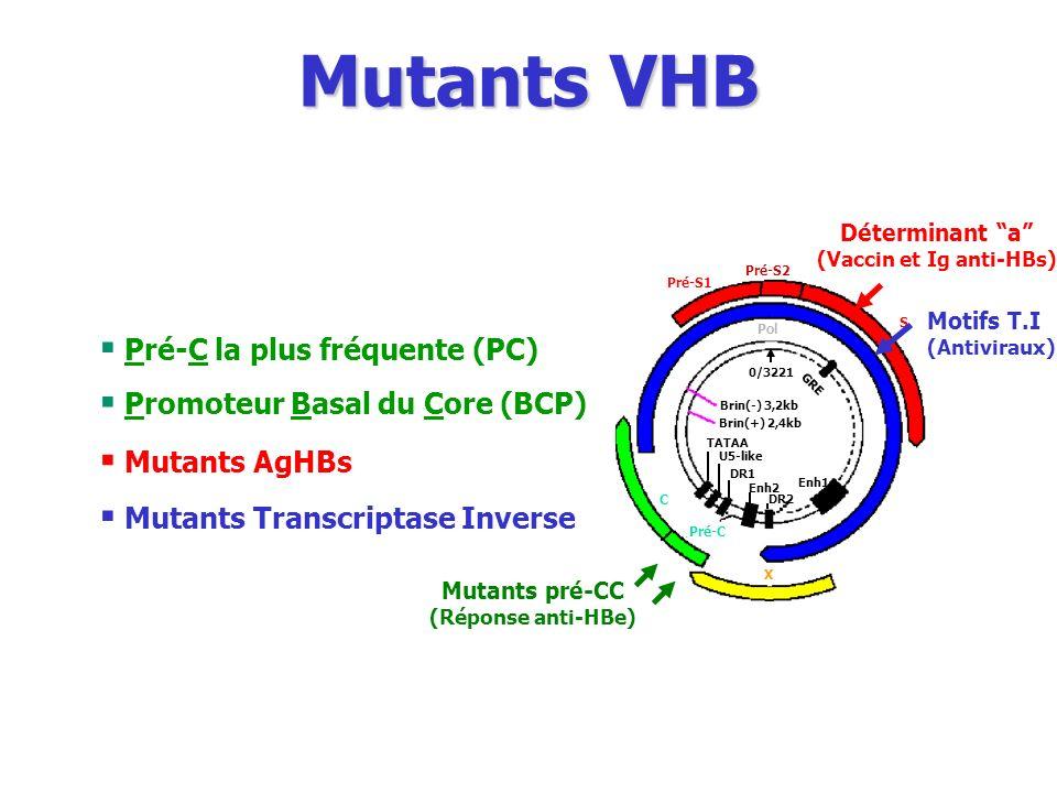 Pré-S1 Pré-S2 S Pol Pré-C C Brin(+) 2,4kb Brin(-) 3,2kb X TATAA U5-like DR1 DR2 Enh1 Enh2 GRE 0/3221 Déterminant a (Vaccin et Ig anti-HBs) Mutants AgH