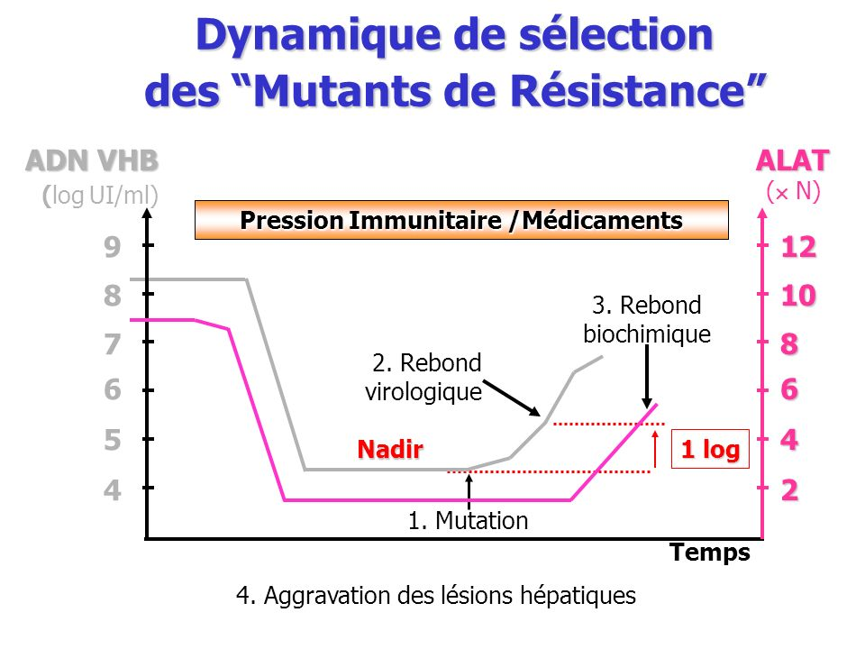 Temps ADN VHB ADN VHB (log UI/ml) 1 log 1. Mutation 2. Rebond virologique 3. Rebond biochimique 4. Aggravation des lésions hépatiques ALAT ( N) Dynami