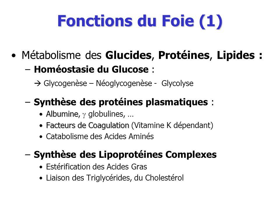 Fonctions du Foie (1) Métabolisme des Glucides, Protéines, Lipides : –Homéostasie du Glucose : Glycogenèse – Néoglycogenèse - Glycolyse –Synthèse des