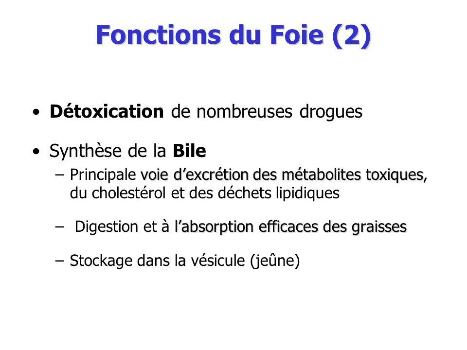 Fonctions du Foie (2) Détoxication de nombreuses drogues Synthèse de la Bile voie dexcrétion des métabolites toxiques –Principale voie dexcrétion des