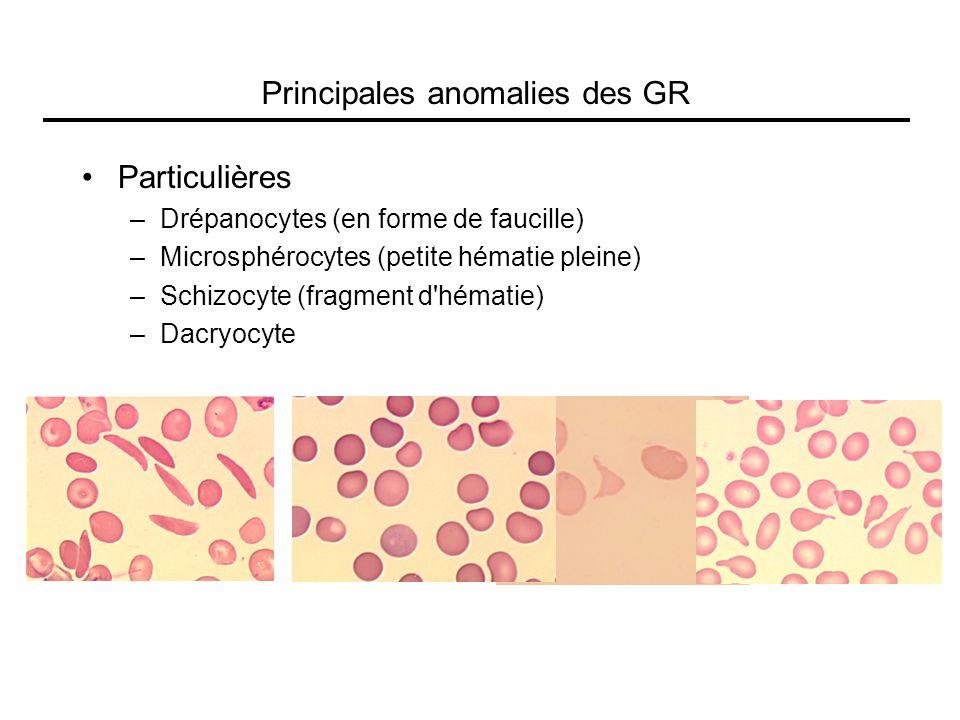 Particulières –Drépanocytes (en forme de faucille) –Microsphérocytes (petite hématie pleine) –Schizocyte (fragment d'hématie) –Dacryocyte