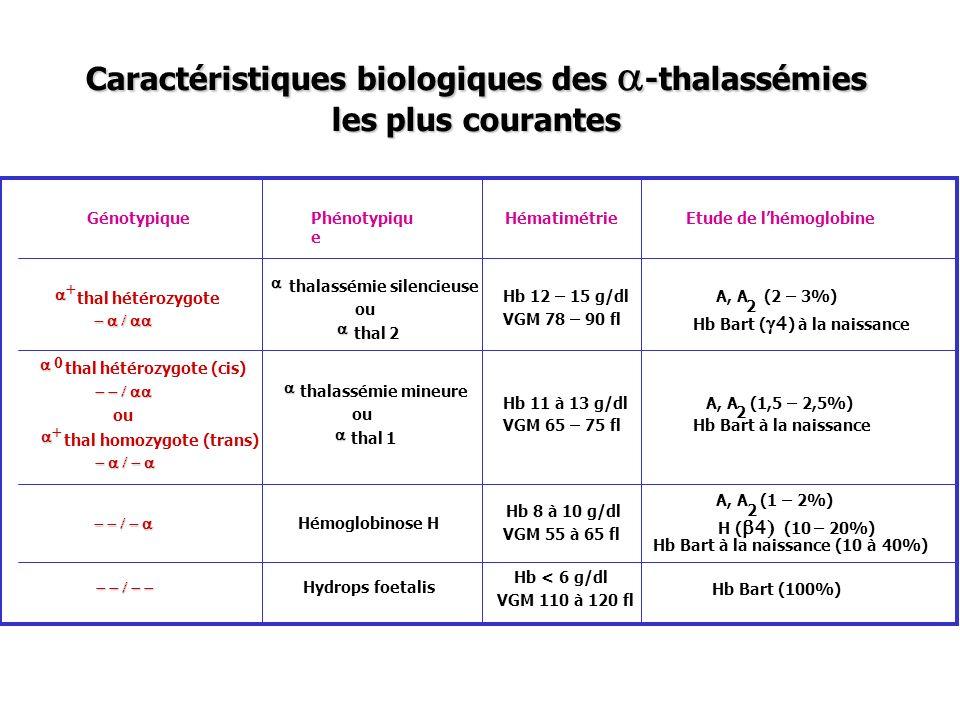 Caractéristiques biologiques des -thalassémies les plus courantes GénotypiquePhénotypiqu e HématimétrieEtude de lhémoglobine thal hétérozygote thalass