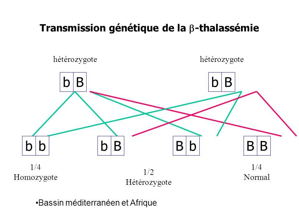 bBbBbBbbBbBB Transmission génétique de la -thalassémie hétérozygote 1/4 Homozygote 1/2 Hétérozygote 1/4 Normal Bassin méditerranéen et Afrique