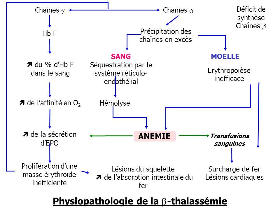 Chaînes Déficit de synthèse Chaînes Hb F du % dHb F dans le sang de laffinité en O 2 de la sécrétion dEPO Prolifération dune masse érythroïde ineffici