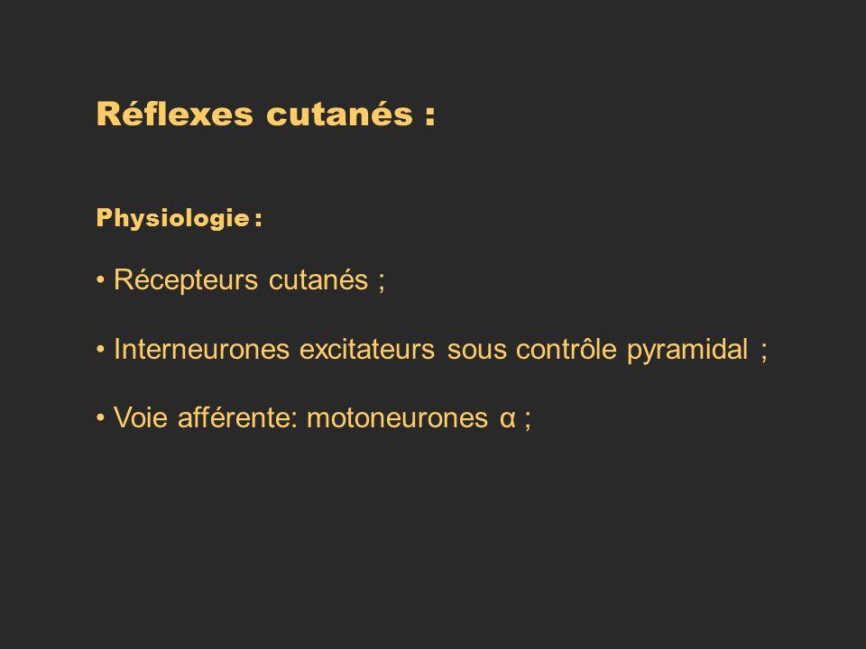 Réflexes cutanés : Physiologie : Récepteurs cutanés ; Interneurones excitateurs sous contrôle pyramidal ; Voie afférente: motoneurones α ;