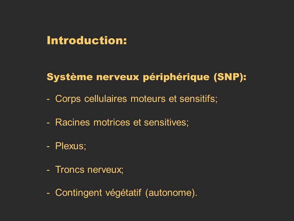 Introduction: Système nerveux périphérique (SNP): - Corps cellulaires moteurs et sensitifs; - Racines motrices et sensitives; - Plexus; - Troncs nerve