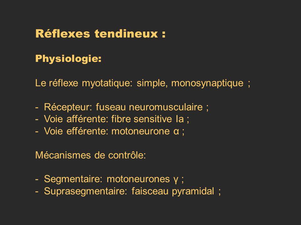 Réflexes tendineux : Physiologie: Le réflexe myotatique: simple, monosynaptique ; - Récepteur: fuseau neuromusculaire ; - Voie afférente: fibre sensit