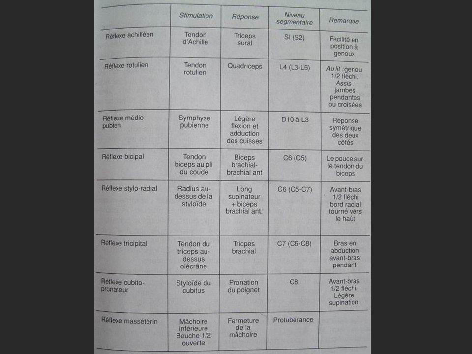 Abolition ou diminution : Périphérique : Dun réflexe isolé (moelle, racine, nerf); Bilatérale et symétrique ; Centrale : Lésion brusque et récente des voies motrices; Coma profond; Autre: Syndrome dAdie; sans signification pathologique.